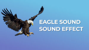 eagle sound assassin's creed sound effect download for free mp3