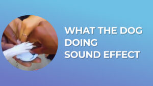 What the dog doing Sound Effect download for free mp3