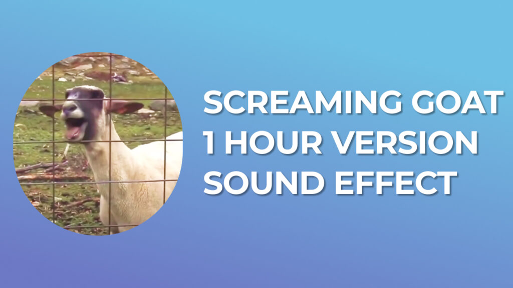 Screaming Goat 1 Hour Version Sound Effect download mp3